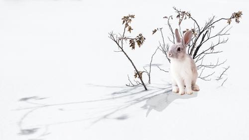O sırada çalılıklar arasında sevimli bir tavşan belirir