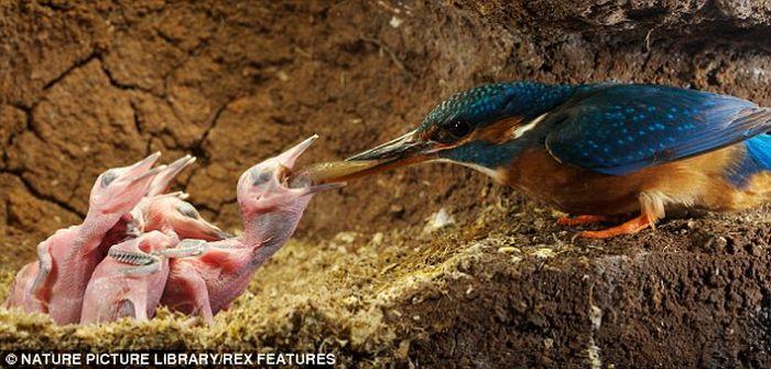 Kuşlarda yavru bakımı