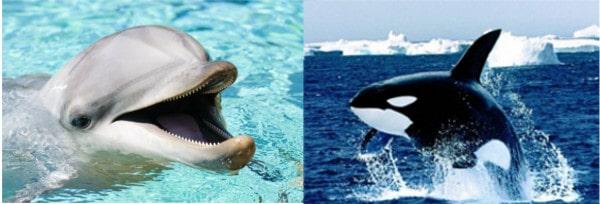 Yunus ve balina suda yaşayan memelilerdir